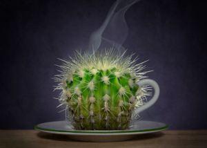 cactus-coffee